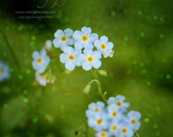 Forget Me Not- Signed Fine Art Photography Print