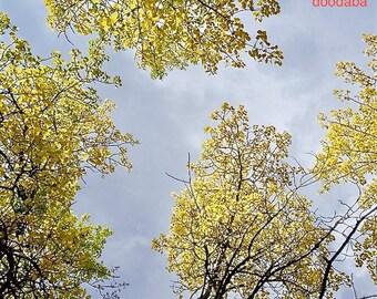 "Fall Autumn Aspen Yellow trees Photograph Art Fabric Block 8.5"" x 9"" Doodaba"