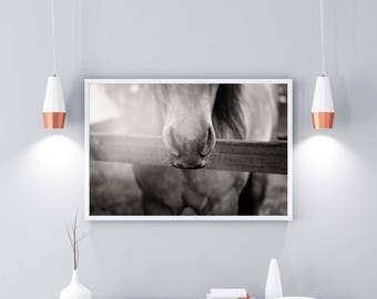 Black and White Wall Art Poster Home Decor: Equine