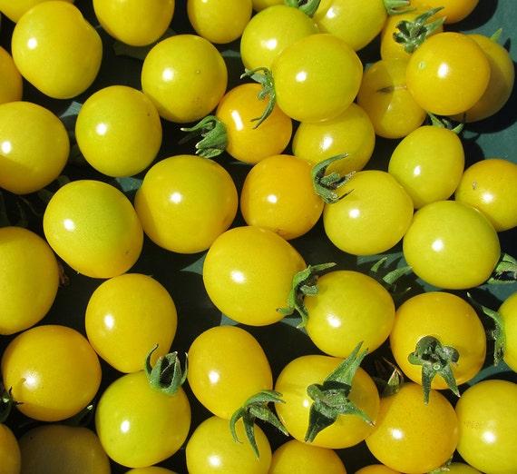 Galina Cherry Tomato