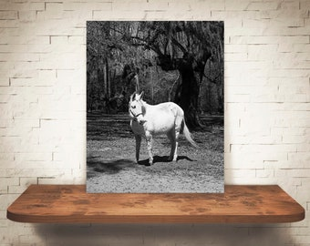 Mule Photograph - Fine Art Print - Black & White Photography - Wall Art - Wall Decor - Pictures of Mules - Farmhouse Decor - Animal Prints