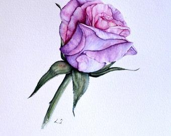 Original watercolor painting Rose , flower illustration , pink rose