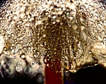 Abstract Art, Bronze Art,  Large Art, Bronze Anniversary,Dandelion Wall Art, Rain Drops Print, Water Drops, Dandelion Print, Macro Photo