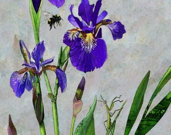 """21x25"""" Framed and Matted, Hummingbird and Irises"""