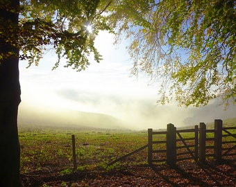 Woodland Landscape, Art Print, Early Mist - 'Morning Light'