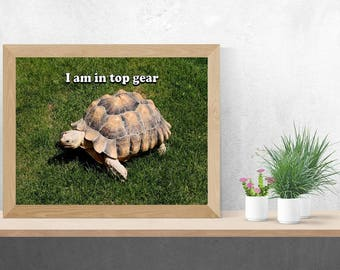 I am in top gear print: tortoise. Digital photo download. Print. Poster. Tortoise. Funny. Humorous. Animal. Reptile. Quote. Wall art.
