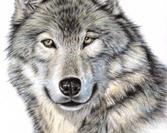 The Wolf - Fine Art Print