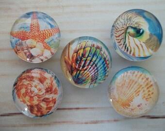 Seashell Fridge Magnets, Kitchen Magnets, Beach Decor, Set of 5, Kitchen Decor, Hostess Gift, Housewarming Gift, Office Decor, Locker Magnet