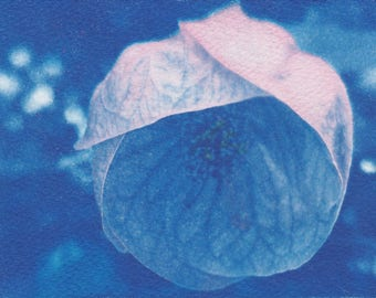 Flowering Maple Cyanotype Sunprint - Hand-tinted Flower