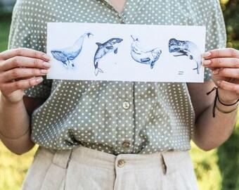 Watercolor Whale Species Print