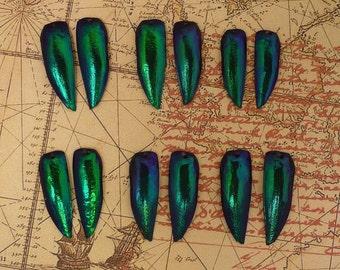 6 Pair Drilled Blue Jewel Beetle Wings