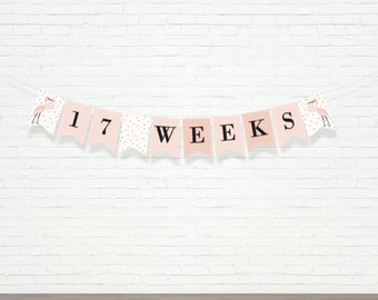Printed and Shipped - Pink Pregnancy Banner - Week By Week Banner - Maternity Banner - Bump Tracker