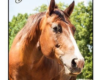 Set of 10 Cards and Envelopes of Flirt / Portion of Proceeds go to Horses & Heroes, Inc