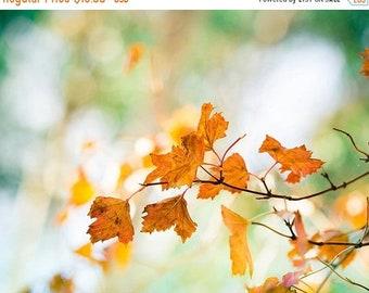 ON SALE autumn photography leaves 8x10 20x30 fall photography fine art nature photography large botanical wall art orange green rust autumn