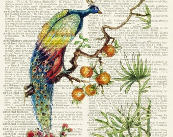 Peacock no.1 painting print