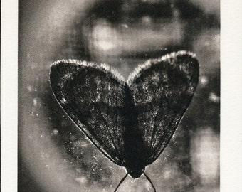 MOTH print, palladium photograph