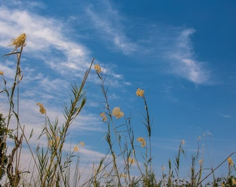 "Floral Photography, ""Blowing in the Wind"", Blue Skies, Landscape Photo, Clouds, Customizable Sizes Upon Request"