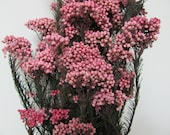 Items similar to pink rice flowers preserved flowers bouquet pink rice flowers preserved flowers bouquet flowers filler flowers great for wedding filler flowers in bouquets and centerpieces mightylinksfo