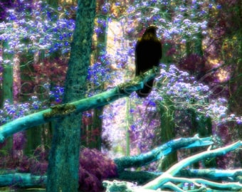 MYSTICAL RAVEN FOREST Surreal Fantasy Photo Twilight Art Print Teal Lavender Black Raven Crow Trees Colorful Forest Choose Size