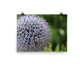 """Floral Poster by ELN Photography, Purple, Green. 12""""x16"""", 12""""x18"""", Ready to Frame."""