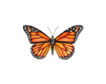 Monarch, monarch print, monarch art, butterfly print, butterfly painting, monarch painting, watercolor butterfly, watercolor monarch
