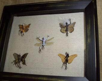 Pixie Collection - 5 specimens