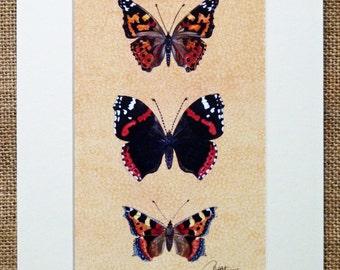 Schmetterling Bild, Schmetterling malen, drucken Schmetterling, Schmetterling Kunst - Schmetterling Print von meinem original-Gemälde montiert. Eine schöne Geschenkidee!