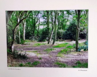 "Woodland Scene, Forest Photograph, Norfolk Countryside, Signed Limited Edition A3 Landscape Color Photograph 50cm x 40cm (20"" x 16"") Mount."