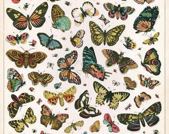 Butterfly Chart Poster/Wrap Large Wall Art Print