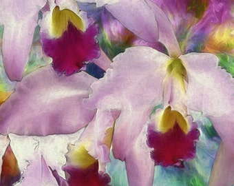 Cattelya Orchids,  Tropical, Fine Art Print,  Matted and Unmatted, Botanical Art, tropical decor, flower collection, orchid painting
