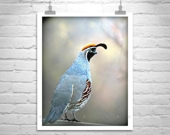 Quail Bird Photography, Bird Art, Quail Picture, Gambels Quail, Gift for Birders, Quail Art, Quail Print, Gift for Bird Lovers, Arizona Bird
