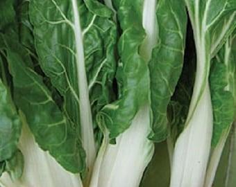 Swiss Chard Virgo 400 seeds Beat Leaf Vegetable