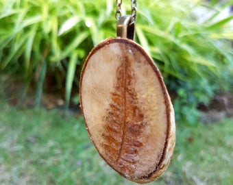 Woodburned live edge birch pendant necklace, with an aged dried fern leaf, with brass chain, botanical and nature lovers