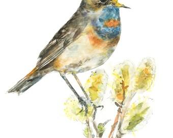 Bluethroat watercolor painting - bird watercolor painting - 5x7 inch print - 0070