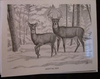 Deer Boxed Note Cards
