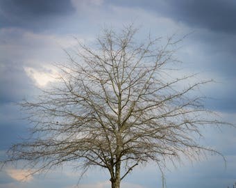 Loneliness as a Tree (color)