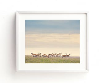 """antelope, pronghorn, wall art, landscape, large art, large wall art, wildlife, modern, contemporary, landscape print - """"Strength in Numbers"""""""