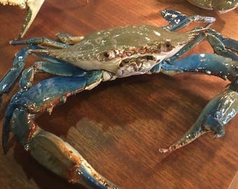 Real blue crab decorations