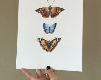 Three Butterflies - PRINT