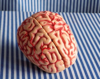 Small Toy Brain