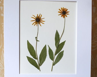 Real Pressed Flower Art Pressed Botanical Art Herbarium of Black Eyed Susans 11x14 OR 16x20