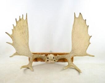 Moose Antler Plaque