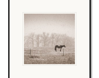 Horse in snowfall, Northern Colorado, western scene, photography, black & white, sepia warm tone, framed photo by Adrian Davis, edition