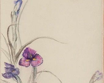 Irises and butterfly