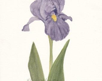 Purple Iris Original Watercolor