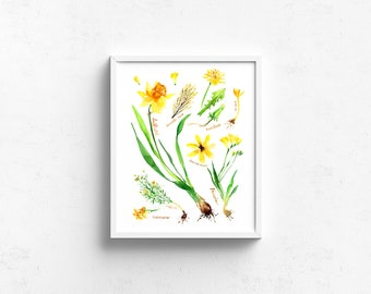 Watercolor Art Giclee Print - Botanical Rainbow series in Yellow