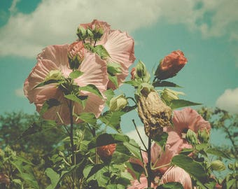Flower Photography - Retro Vintage Style Art - Bohemian decor - Summer Art - Floral Print - Pink - Blue - Garden Print - Pastel Pink Decor