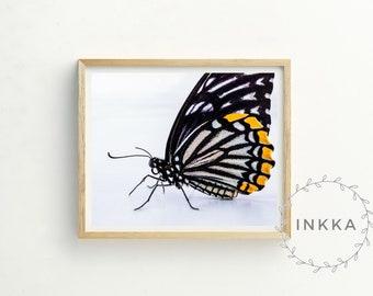 Butterfly Wall Art - butterfly photograph - butterfly print - butterfly painting - girls nursery print - sale art - living room art
