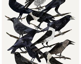 A4 Carrion Crows Print, Crow Illustration, Crow Print,