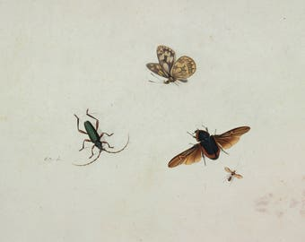 Johannes Bronkhorst: Four Insects. Fine Art Print/Poster (004627)